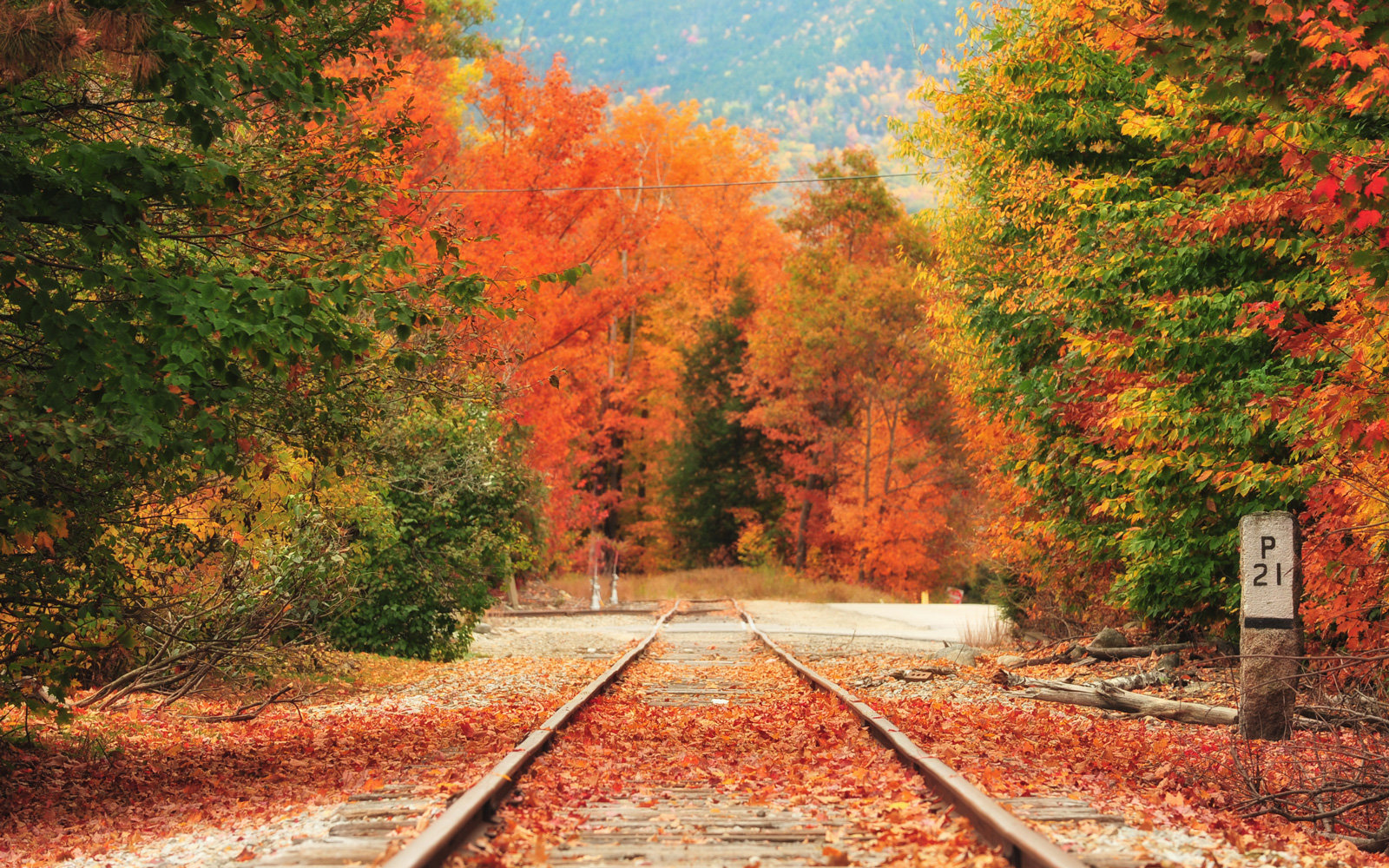 Amtrak Rolls Out Vintage Trains For Fall Foliage Lovers