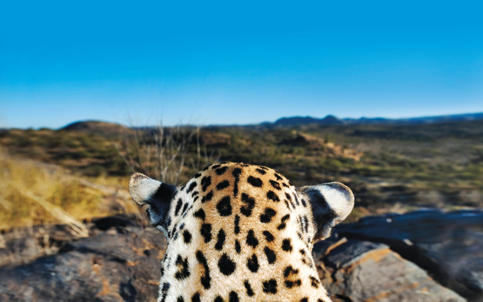 Leopard With Micato Safaris