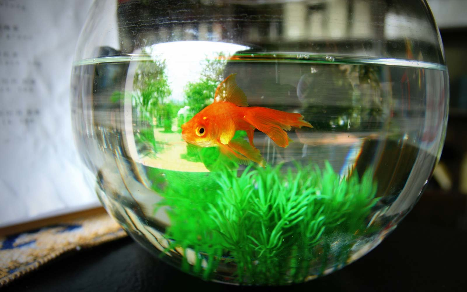 Hotel Lonely Guest Fish Bowl Goldfish Rental