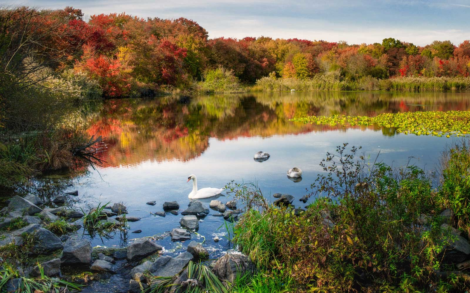 Fall Colors at Massapequa Preserve, Long Island, New York