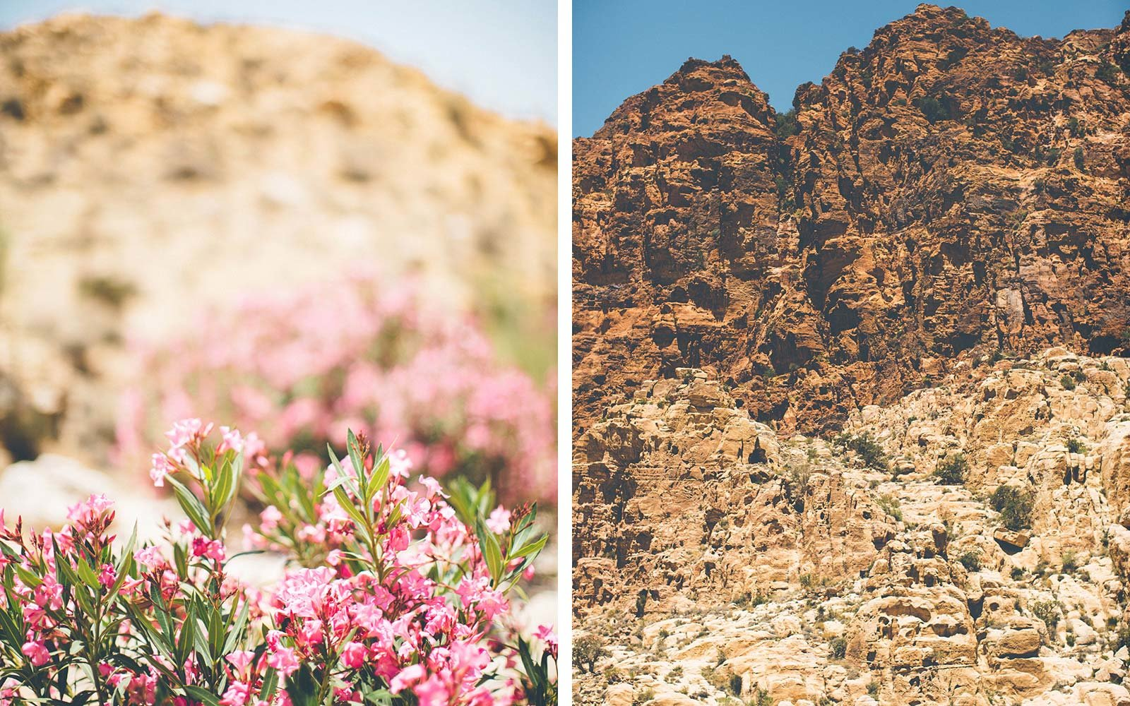 From Dana to Petra, 6 Days on The New Jordan Trail floral wildlife landscape