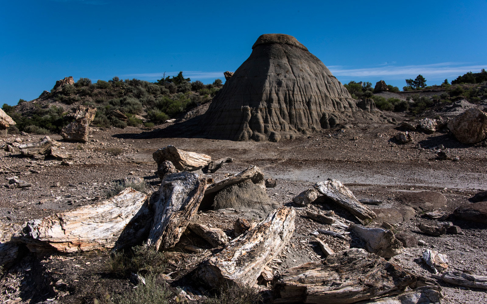 Petrified Wood in the outdoors