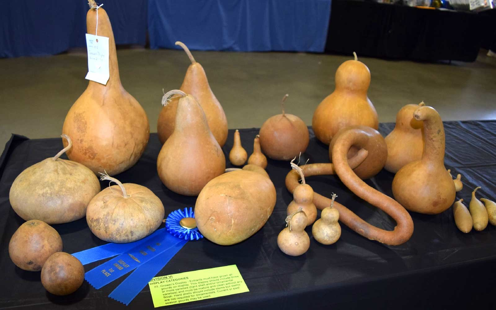Celebrating Gourds in North Carolina