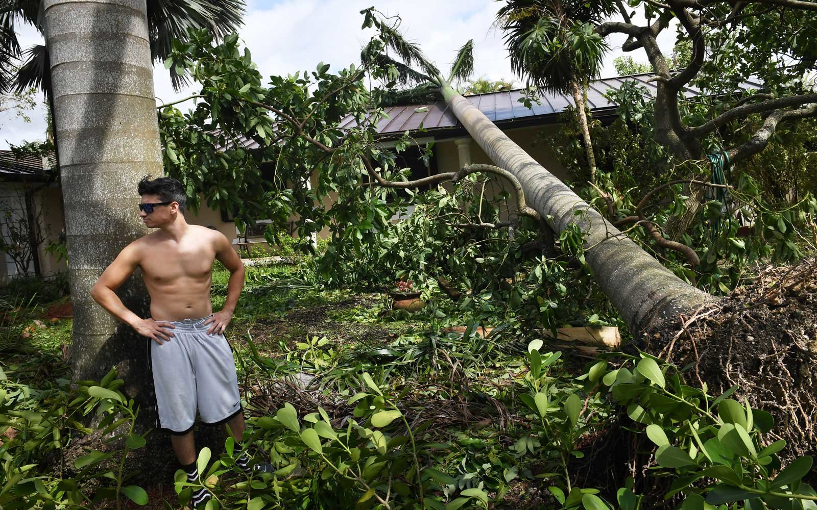 Chris Perez stands near a downed palm tree that landed on his family's home during Hurricane Irma in the Palmetto Bay on Monday September 11, 2017 in Miami, FL