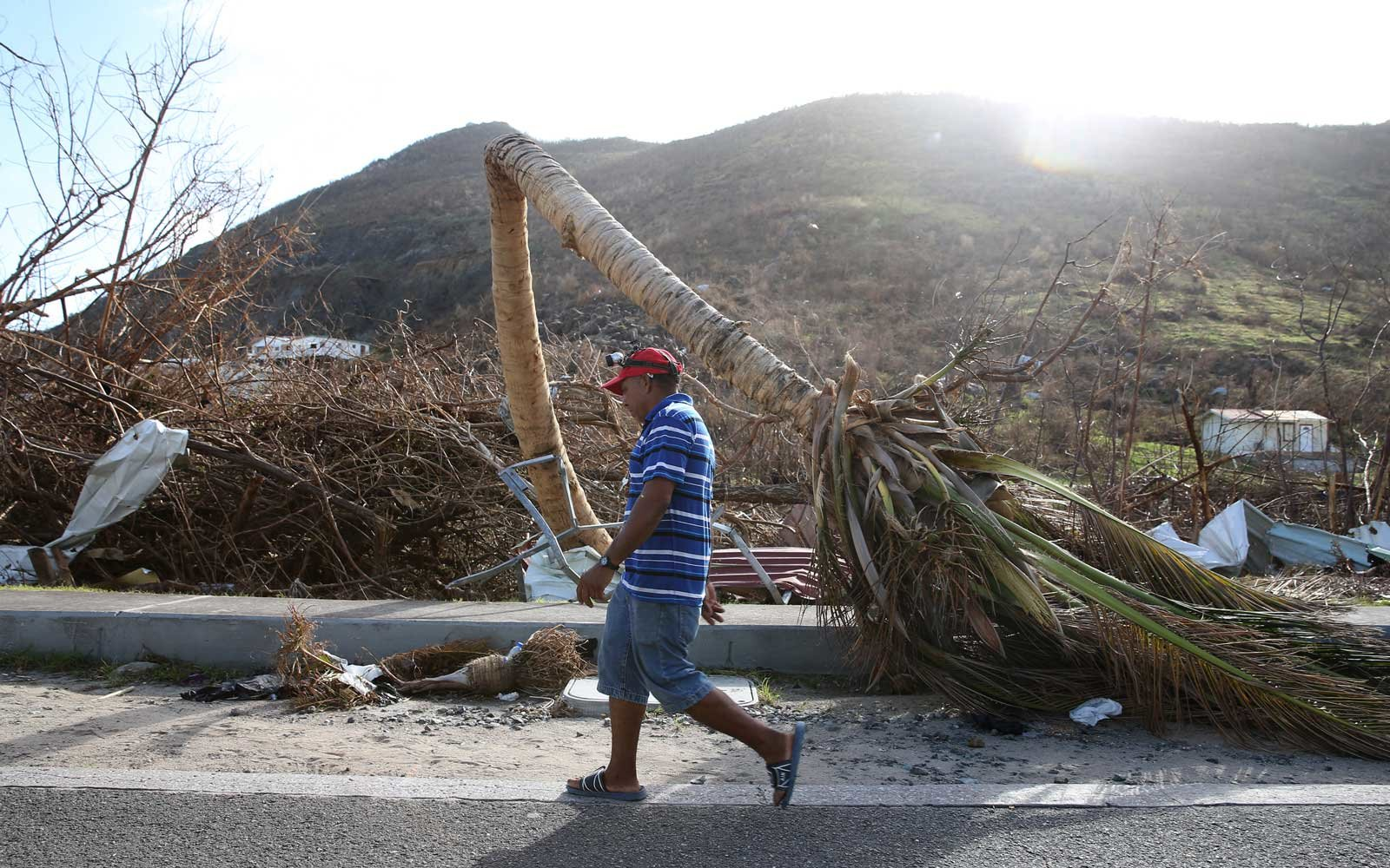 A man walks past a split palm tree on September 11, 2017 in Philipsburg, St. Maarten