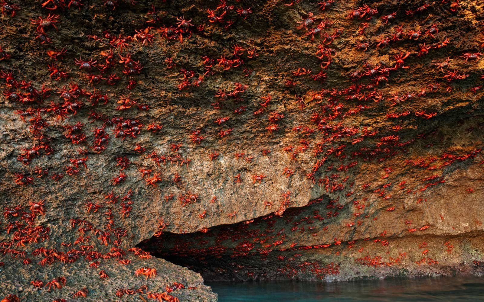 Red Crab Migration, Christmas Island