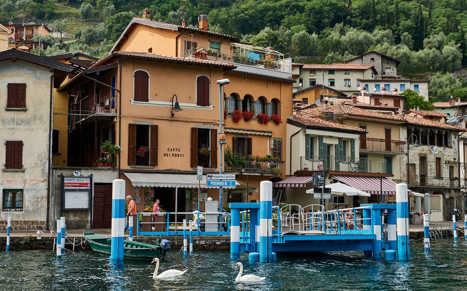 Swans on Lake Iseo