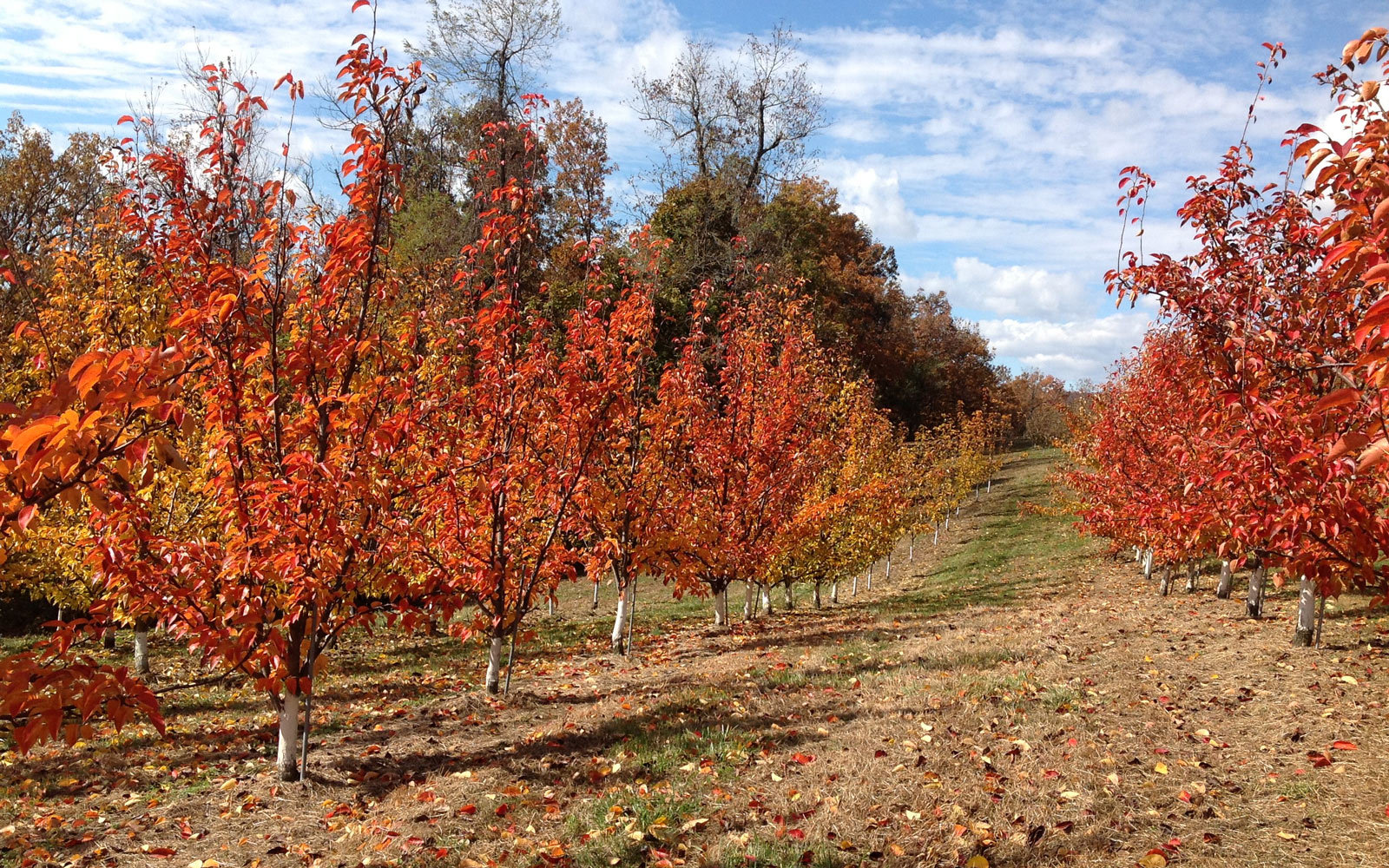 The 19 Best Places to Go Apple Picking in the United States | Travel