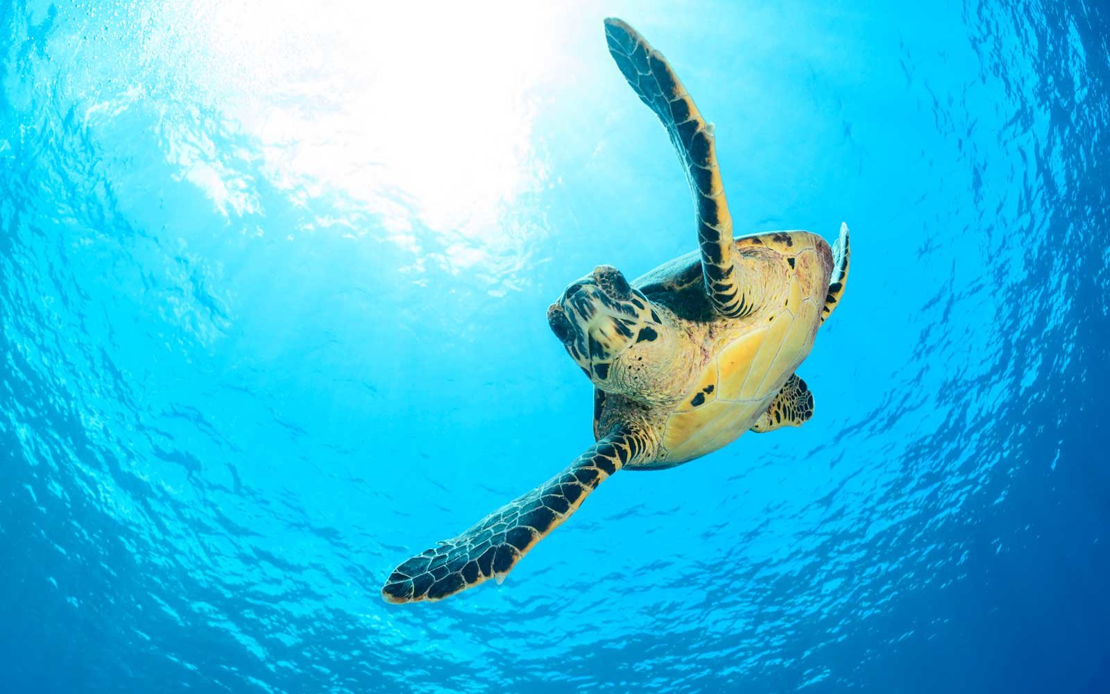 Sea Turtles Are Making A Comeback And It S The Good News We Needed Today Travel Leisure