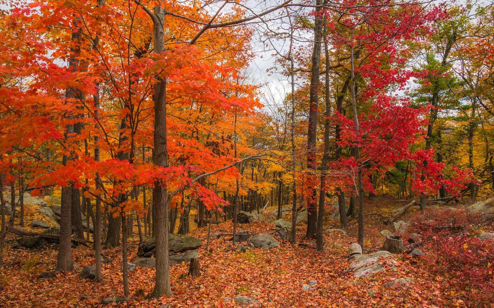 Photograph of fall foliage taken in Bear Mountain, Hudson Valley, New York