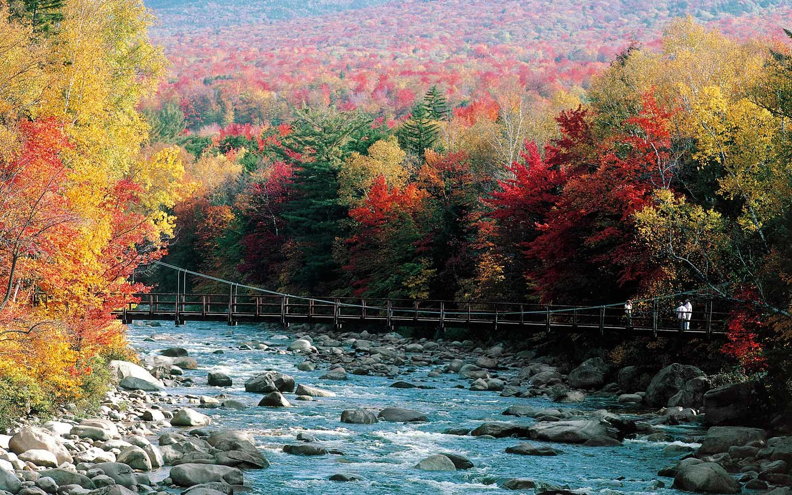 Trees with autumn foliage, White Mountains, New Hampshire, United States of America