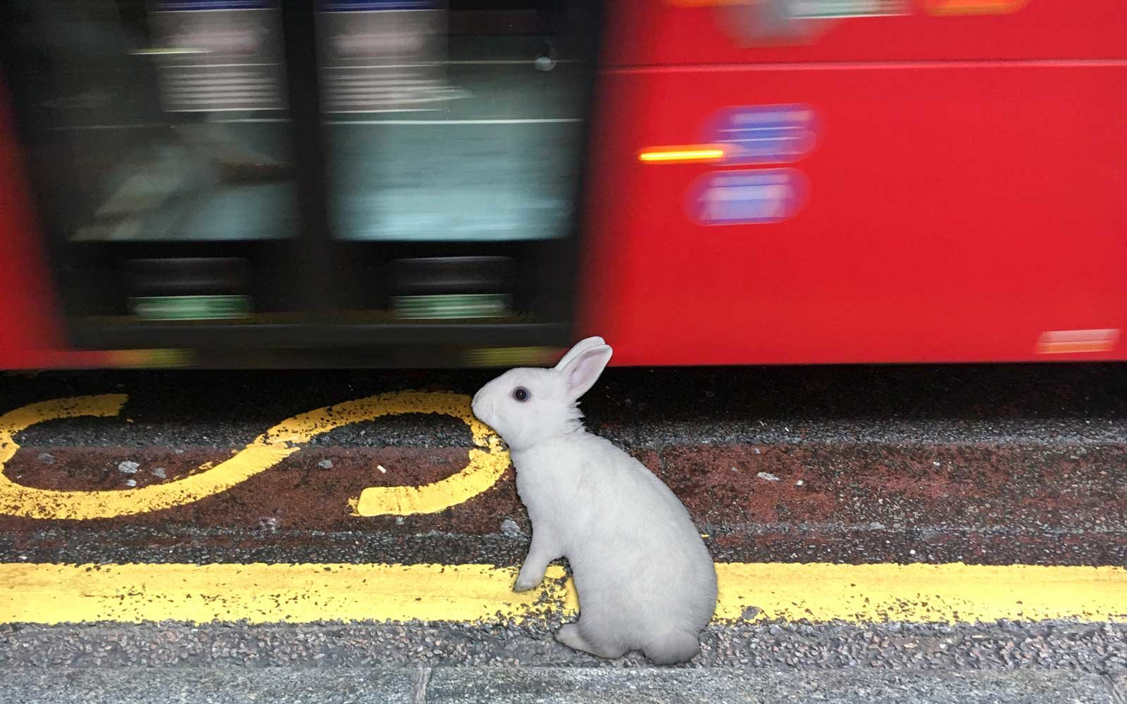 Bunny Rides The Bus
