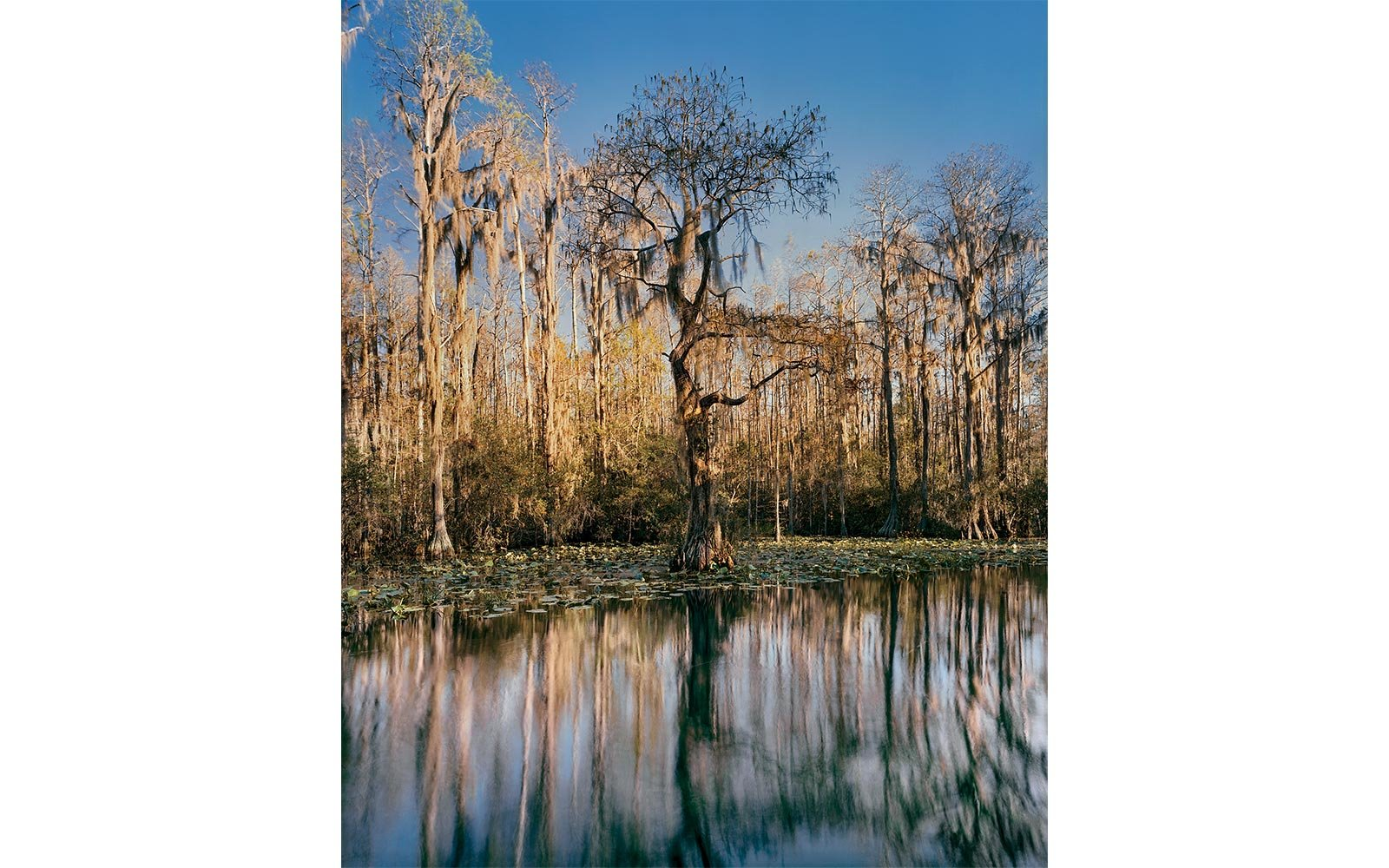 Okenofee Swamp in Georgia