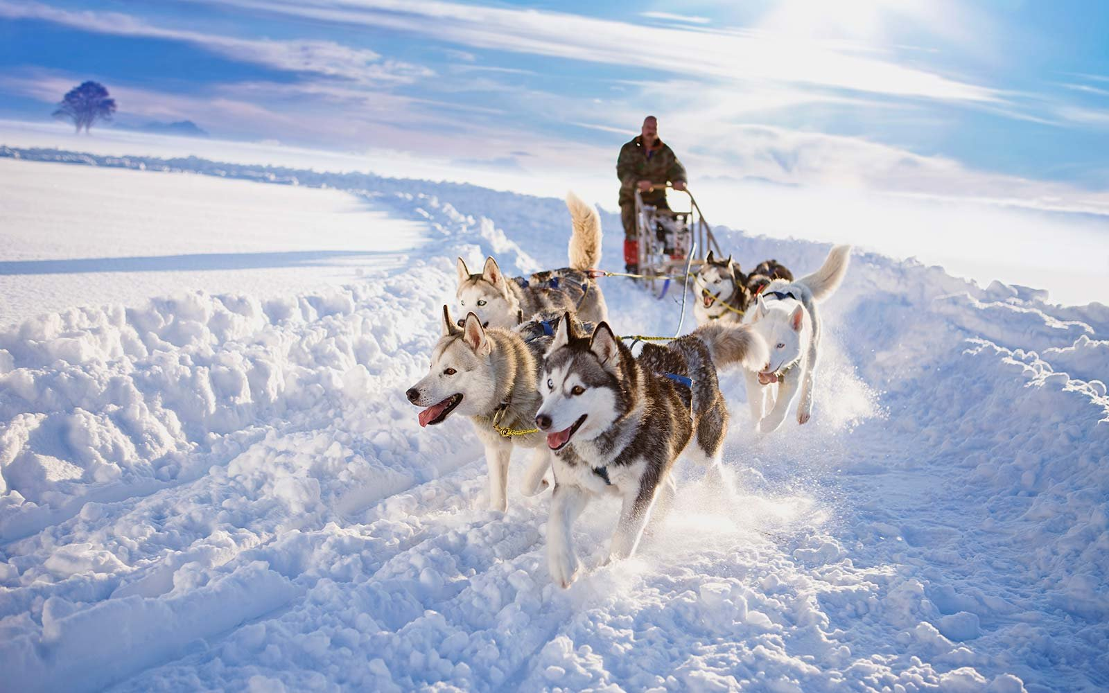 Unique Winter Snow Activities Dog Sledding Iceland