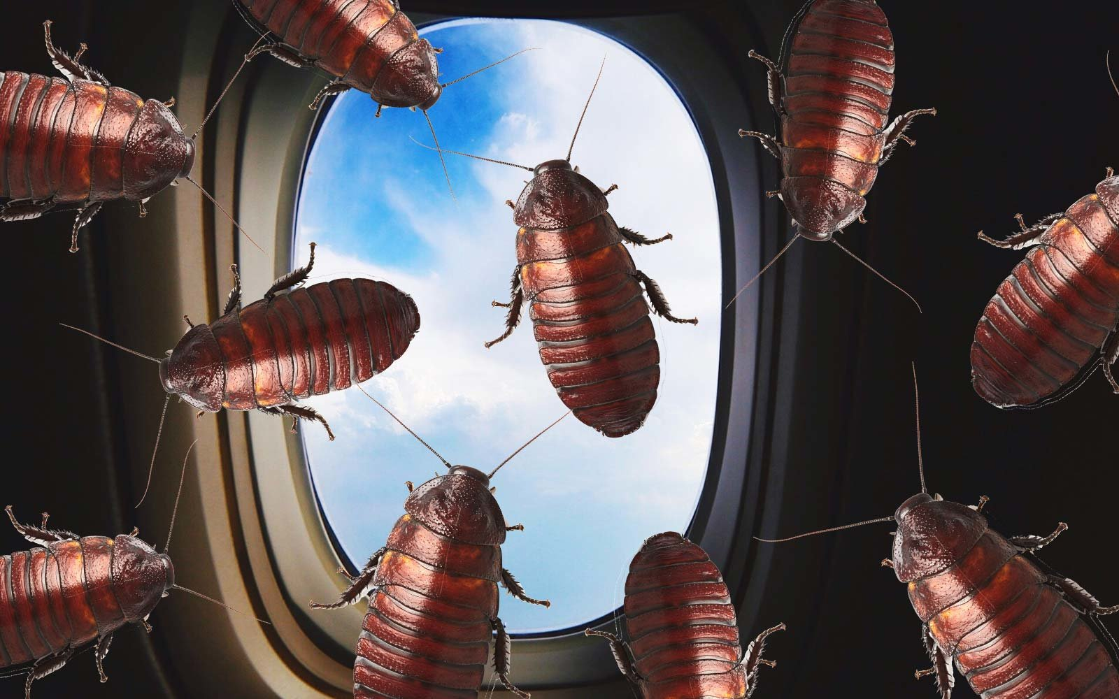 airplane cockroach insect infestation china airline