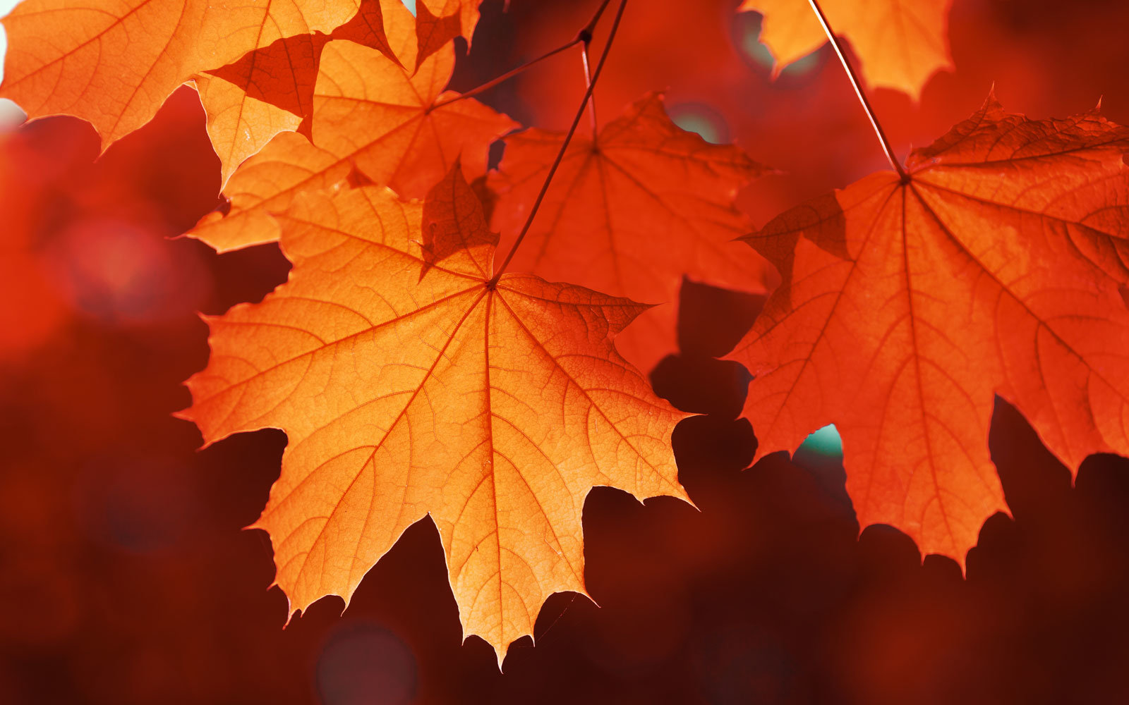 This Company Will Give You 1 For Every Fall Leaf You Send