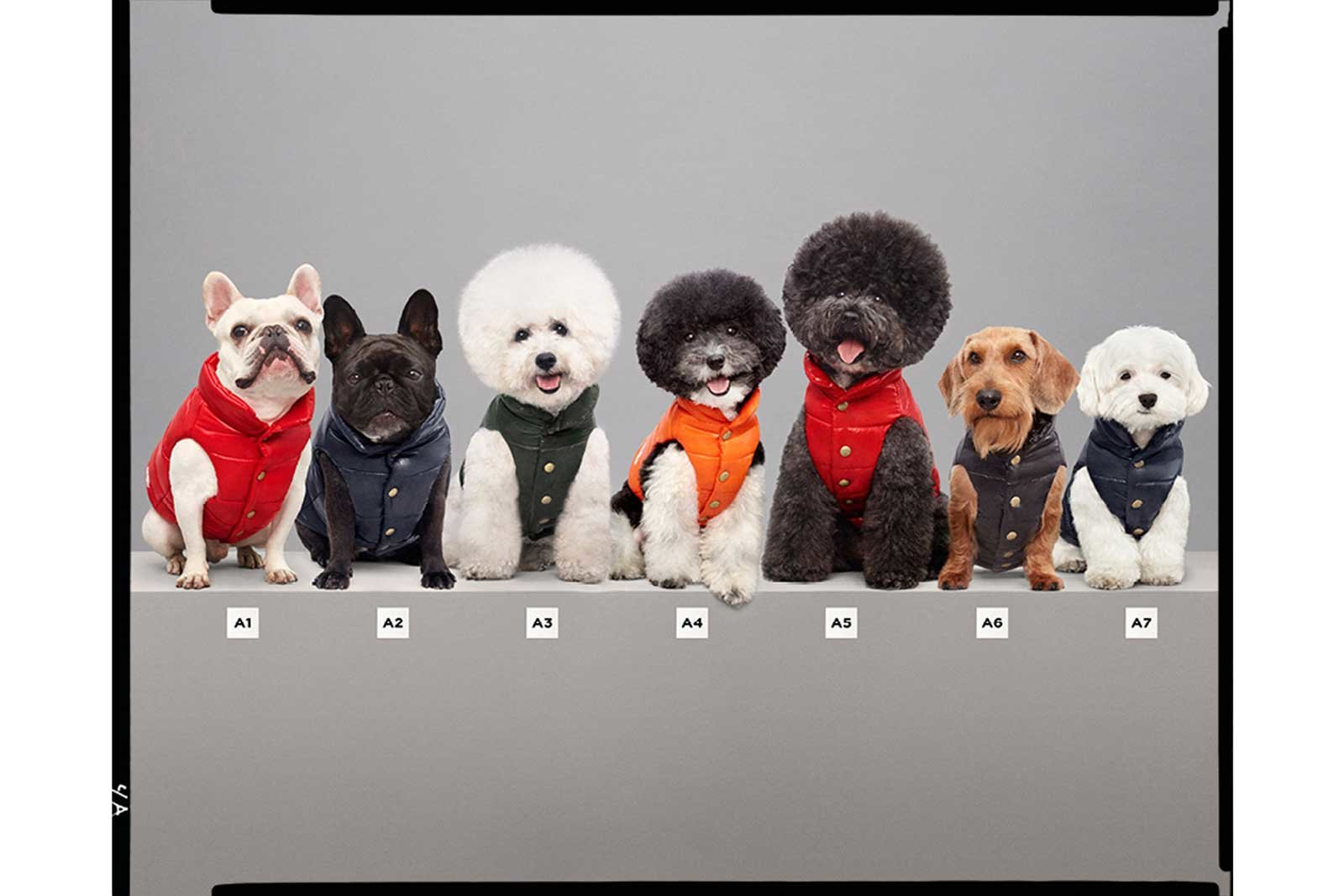 Mixture of Moncler Dog Puffer Jackets