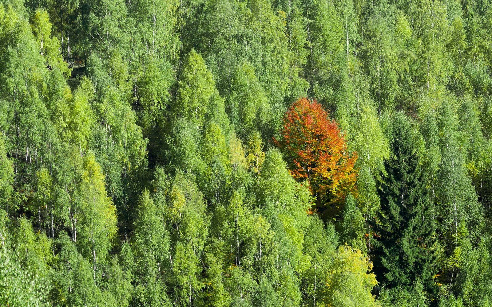 Here\'s Why You Didn\'t See Spectacular Fall Foliage This Year ...