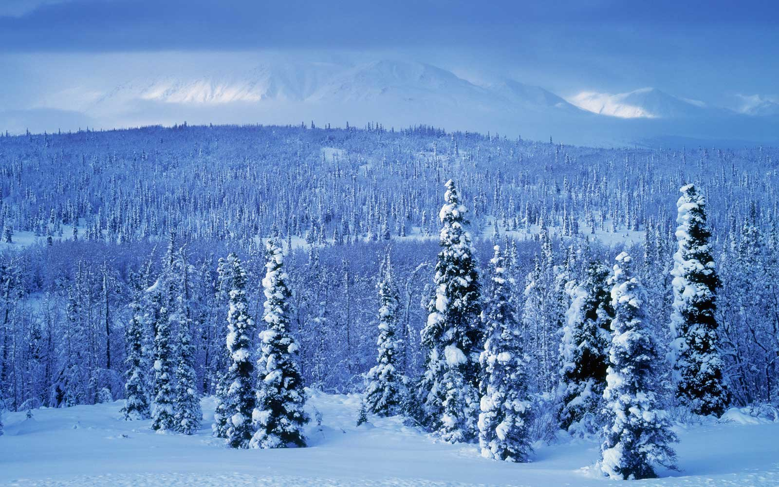 Kluane National Park in Winter, in Yukon Territory, Canada