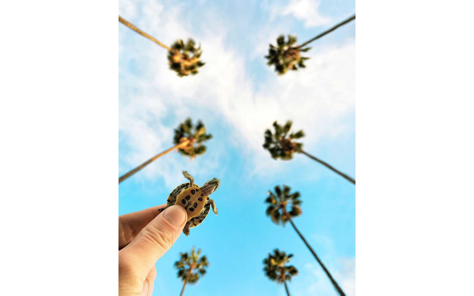 Turtle and palm trees in Los Angeles