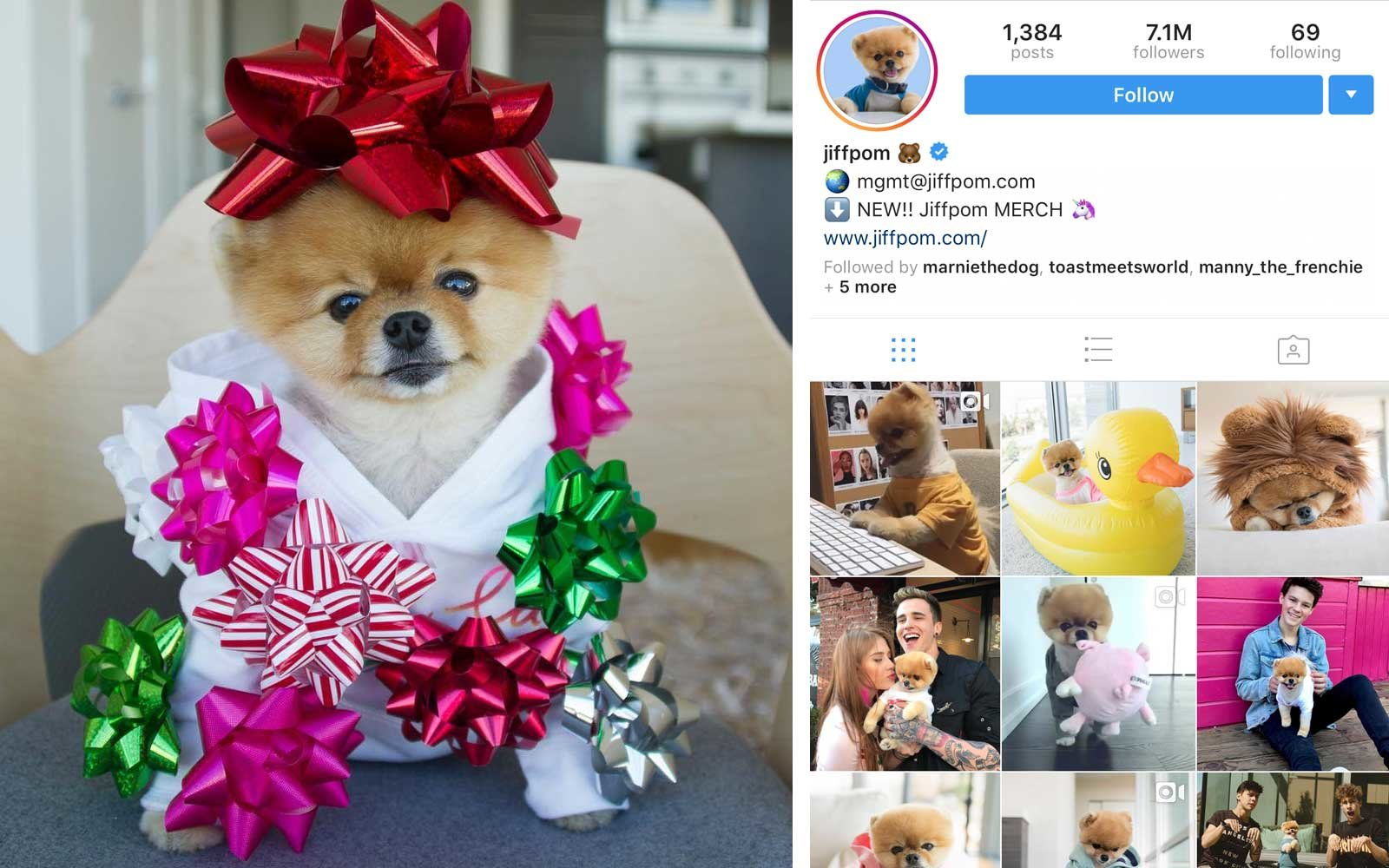 Jiffpom (@jiffpom) - Pomeranian, US - 7M Followers