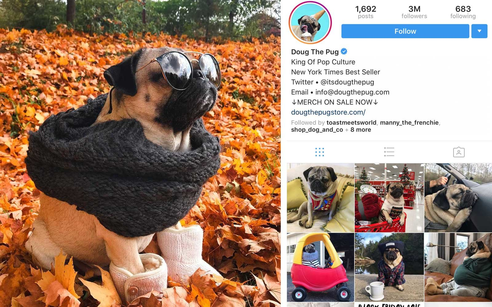 Doug the Pug (@itsdougthepug) - Pug, US - 3M Followers