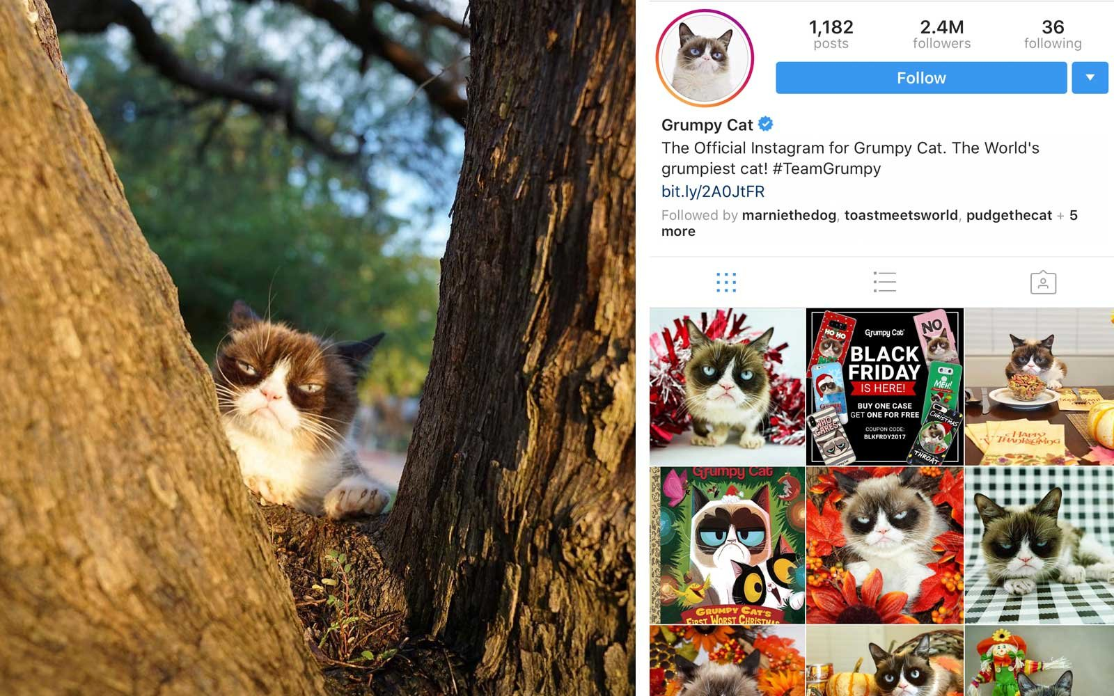 Grumpy Cat (@realgrumpycat) - Cat, US - 2.4M Followers