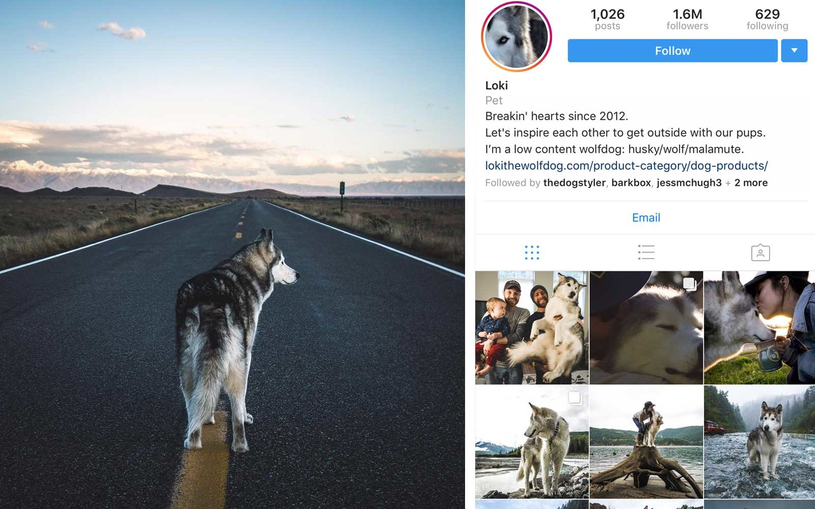 Loki (@loki_the_wolfdog) - Husky, US - 1.6M Followers