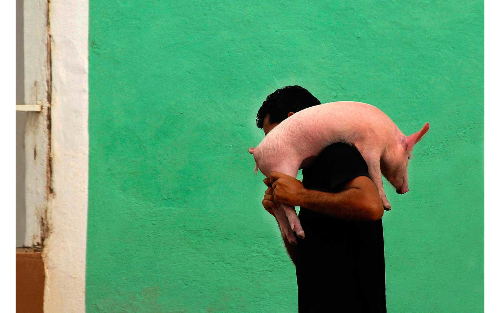 Piglet being carried in Trinidad, Cuba