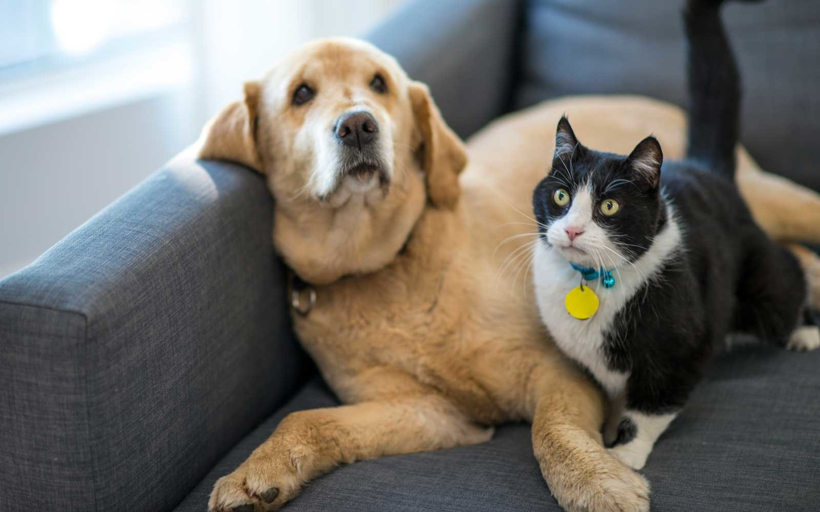 Study Finds Dogs Are Smarter Than Cats