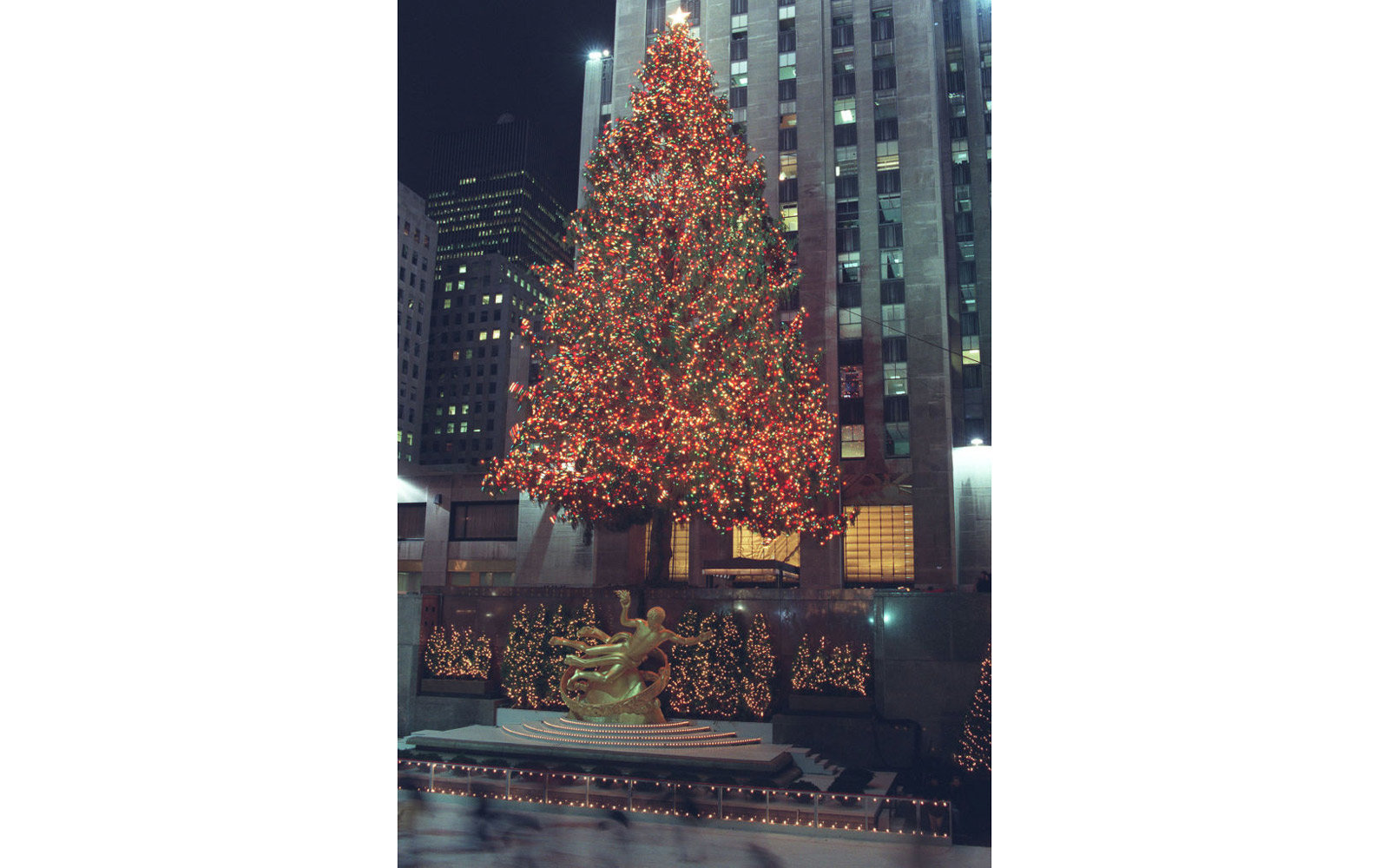 A huge Christmas Tree standing outside the Rockefeller Centre in New York.