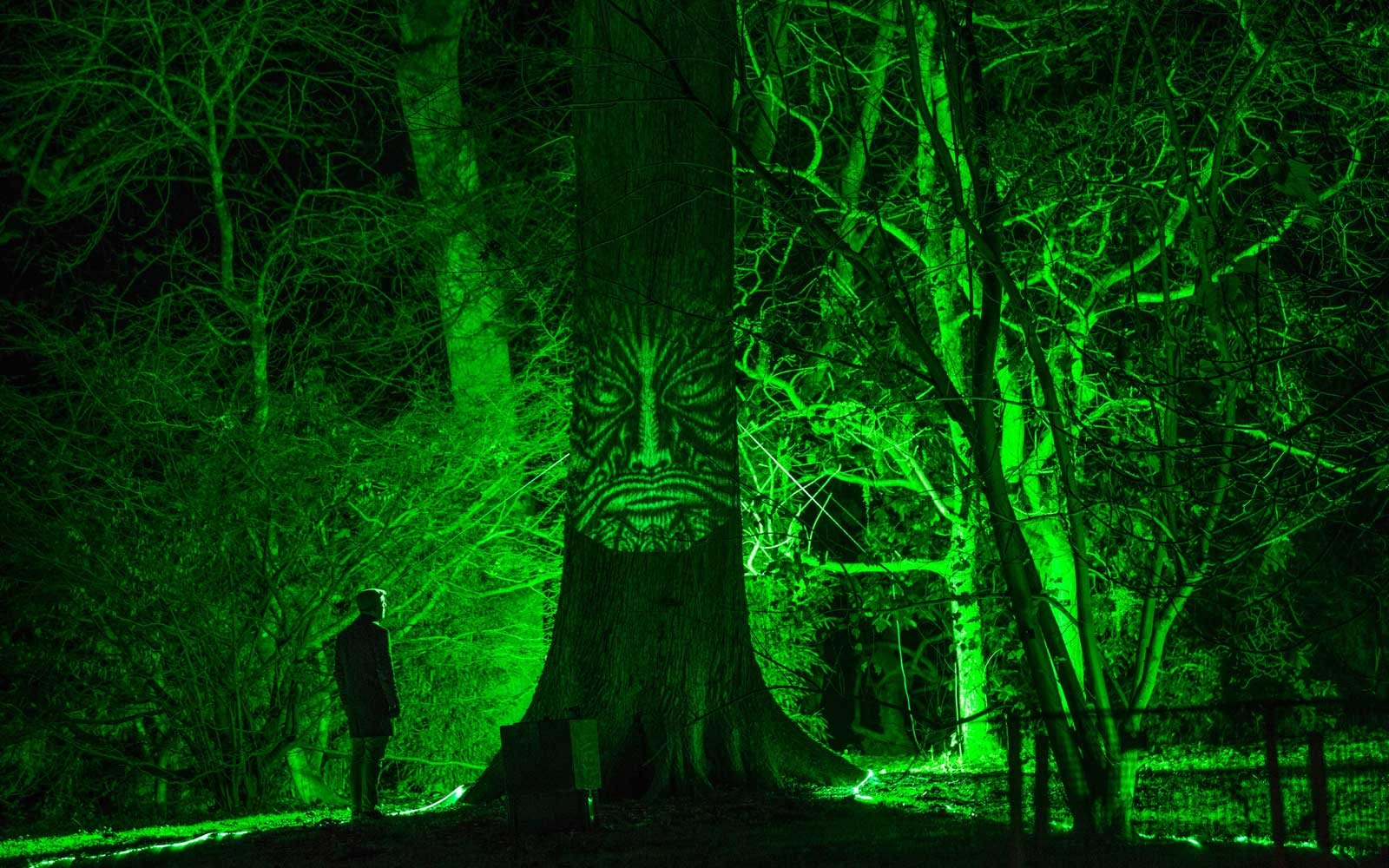 Enchanted Christmas trail in England