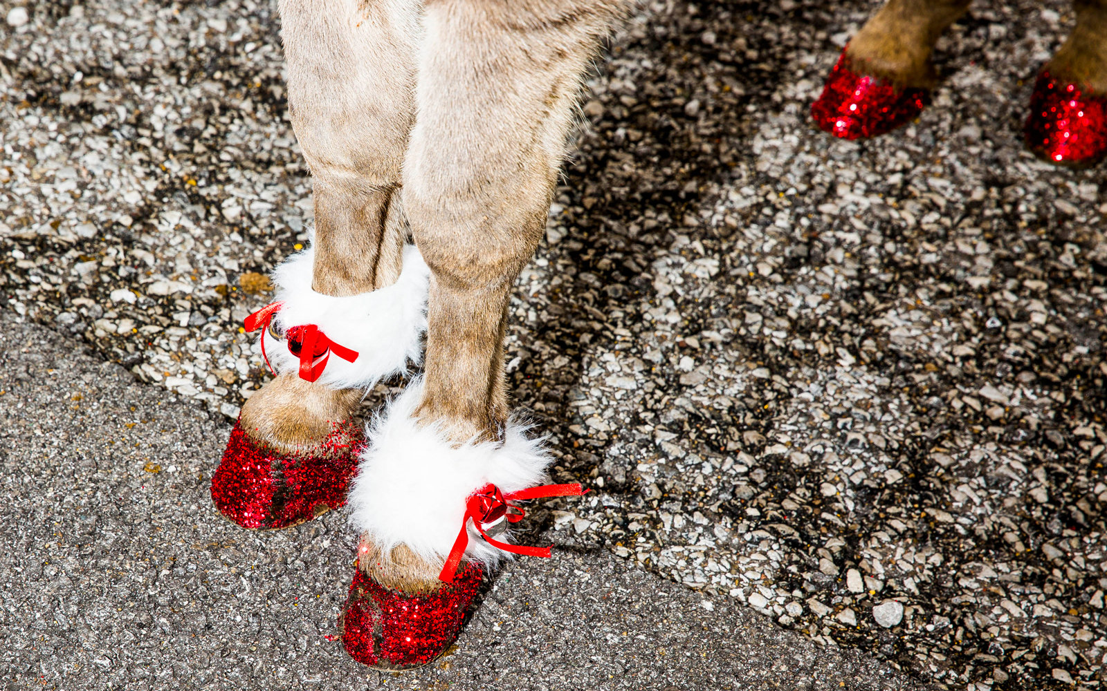 Donkey feet covered in glitter