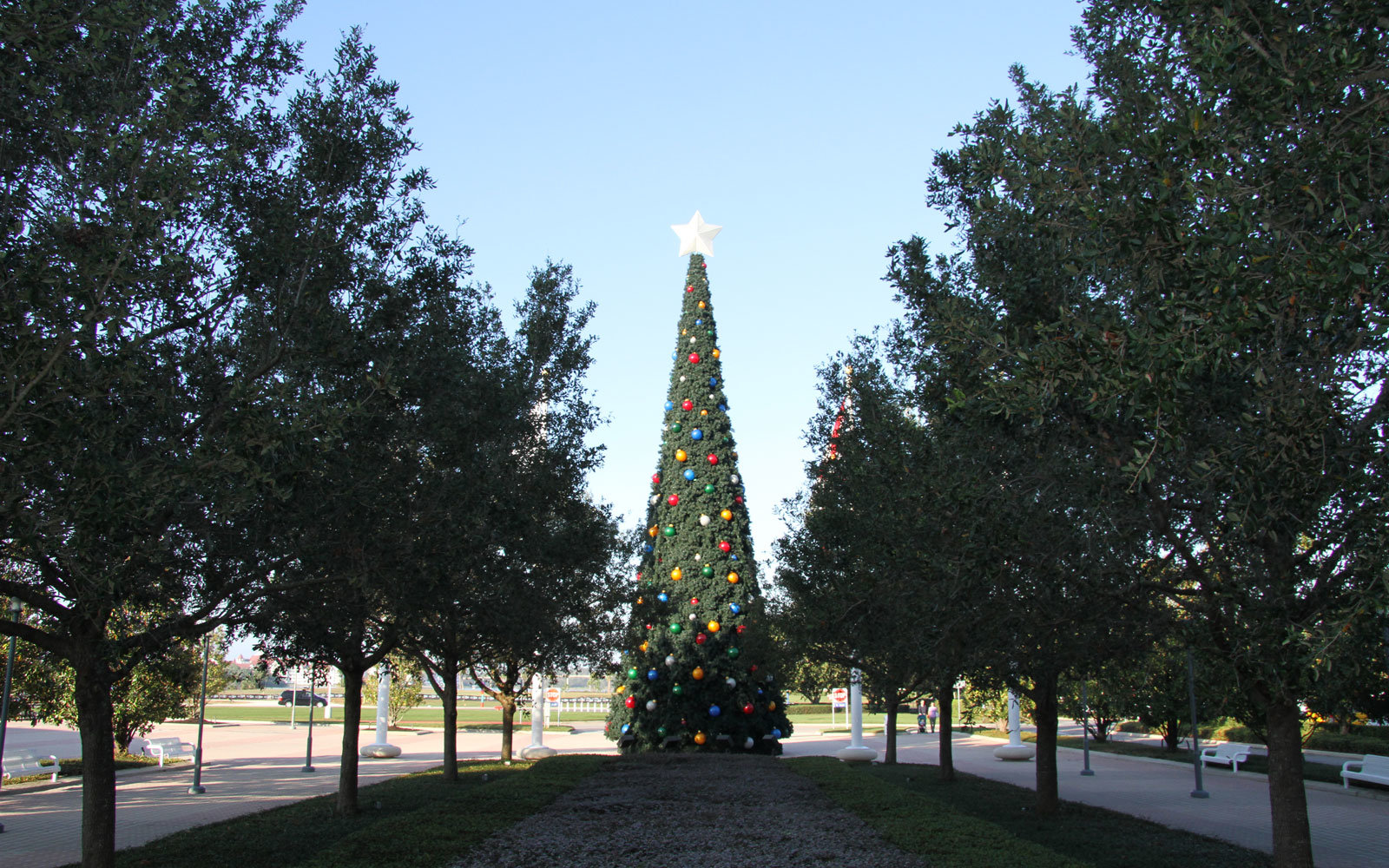 Christmas tree outside of the Contemporary Resort