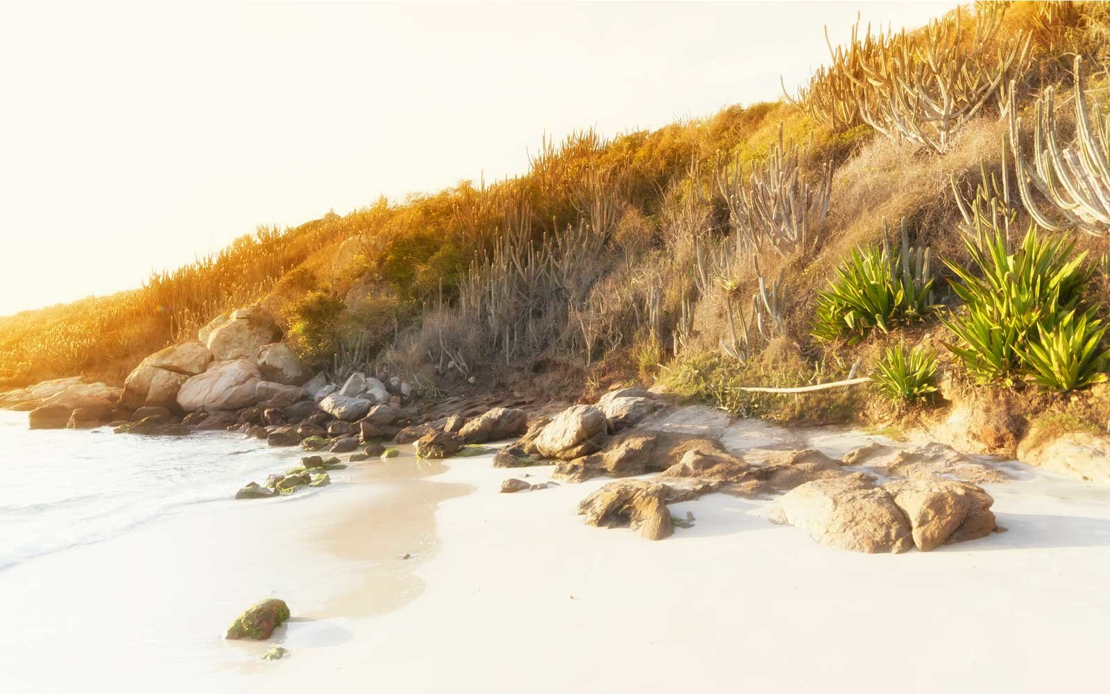 A morning sunlight illuminating the mountain and its cacti at Praia do Forno in Arrail do Cabo, Brazil