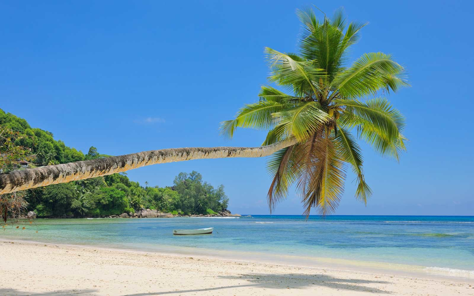 Babe Lazare, Seychelles, Palm tree overhanging at beach.