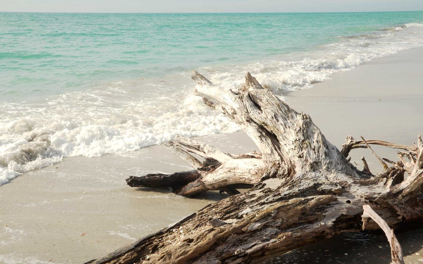 Piece of driftwood along the wages of the Gulf of Mexico at Stump Pass State park in Englewood, Florida.