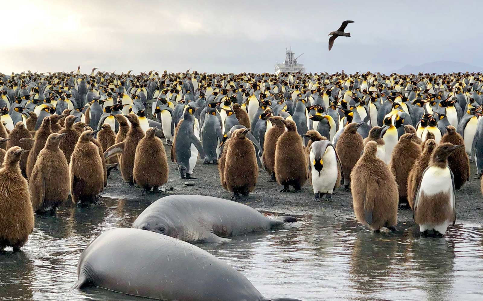 Antarctic Wildlife iPhone X