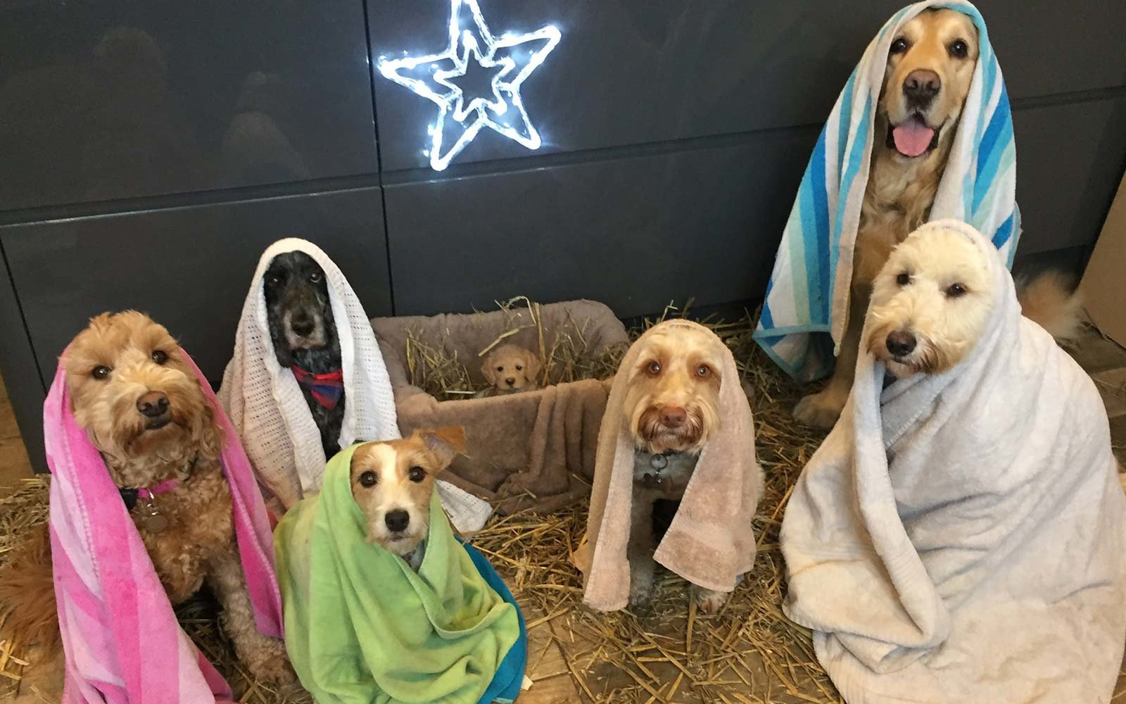 Wags to Riches Shelter UK Dog Nativity scene Christmas Holiday