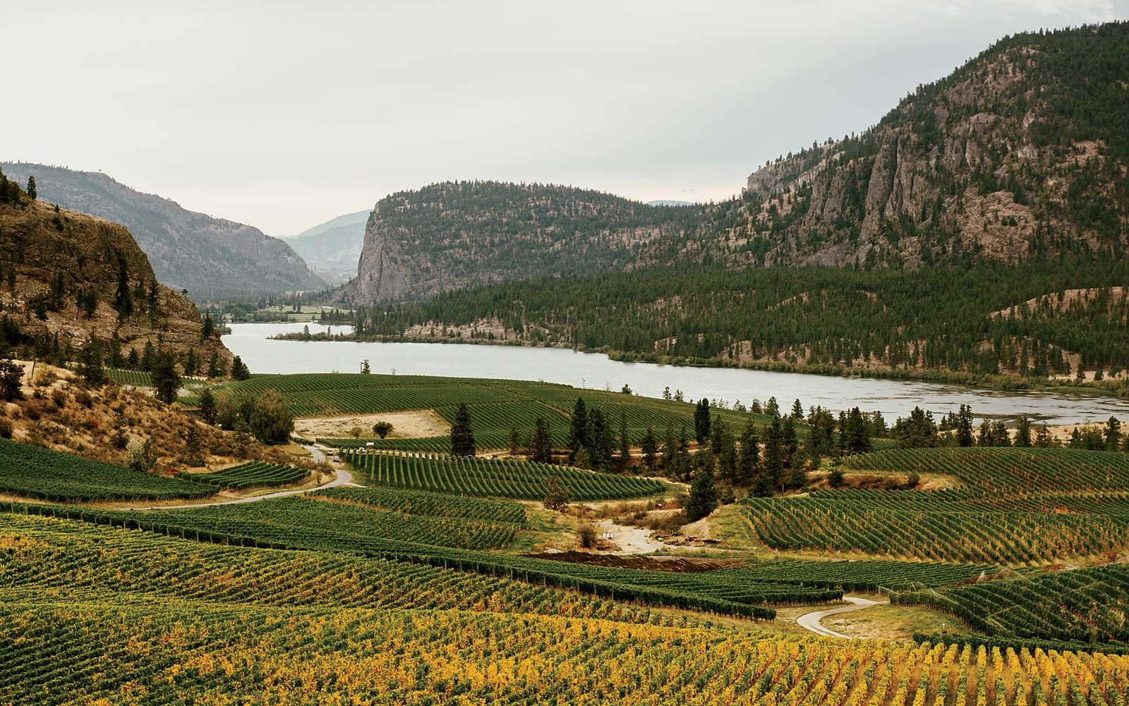 Blue Mountain Winery vineyards in Canada's Okanagan Valley