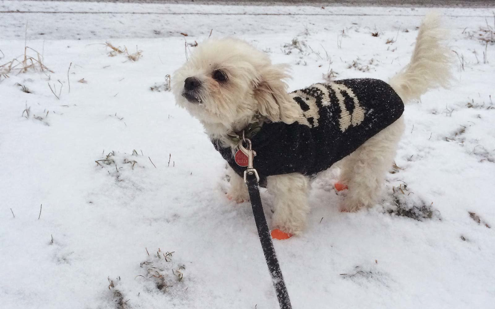 These Dogs in Boots Hate Winter Way More Than You Do