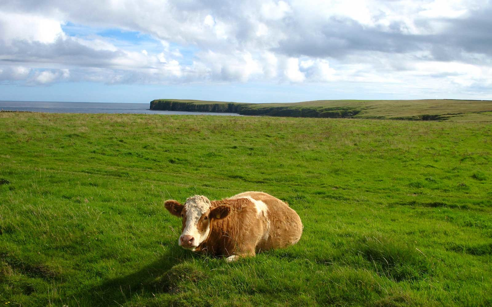 Stronsay island off of Scotland