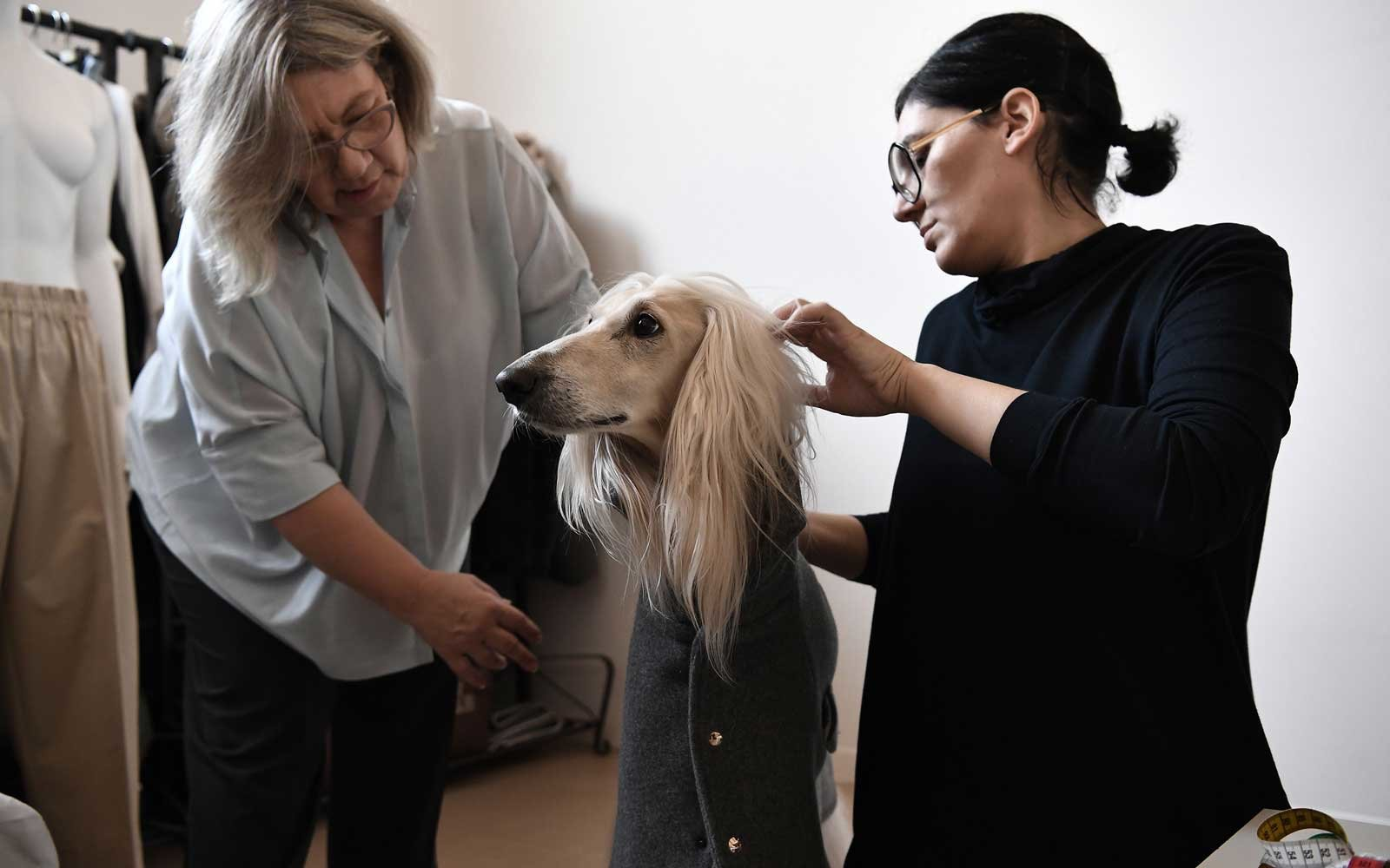 "Italian designer Giovanna Temellini designed a line of clothing ""Dog-à-Porter"" dedicated to dogs."
