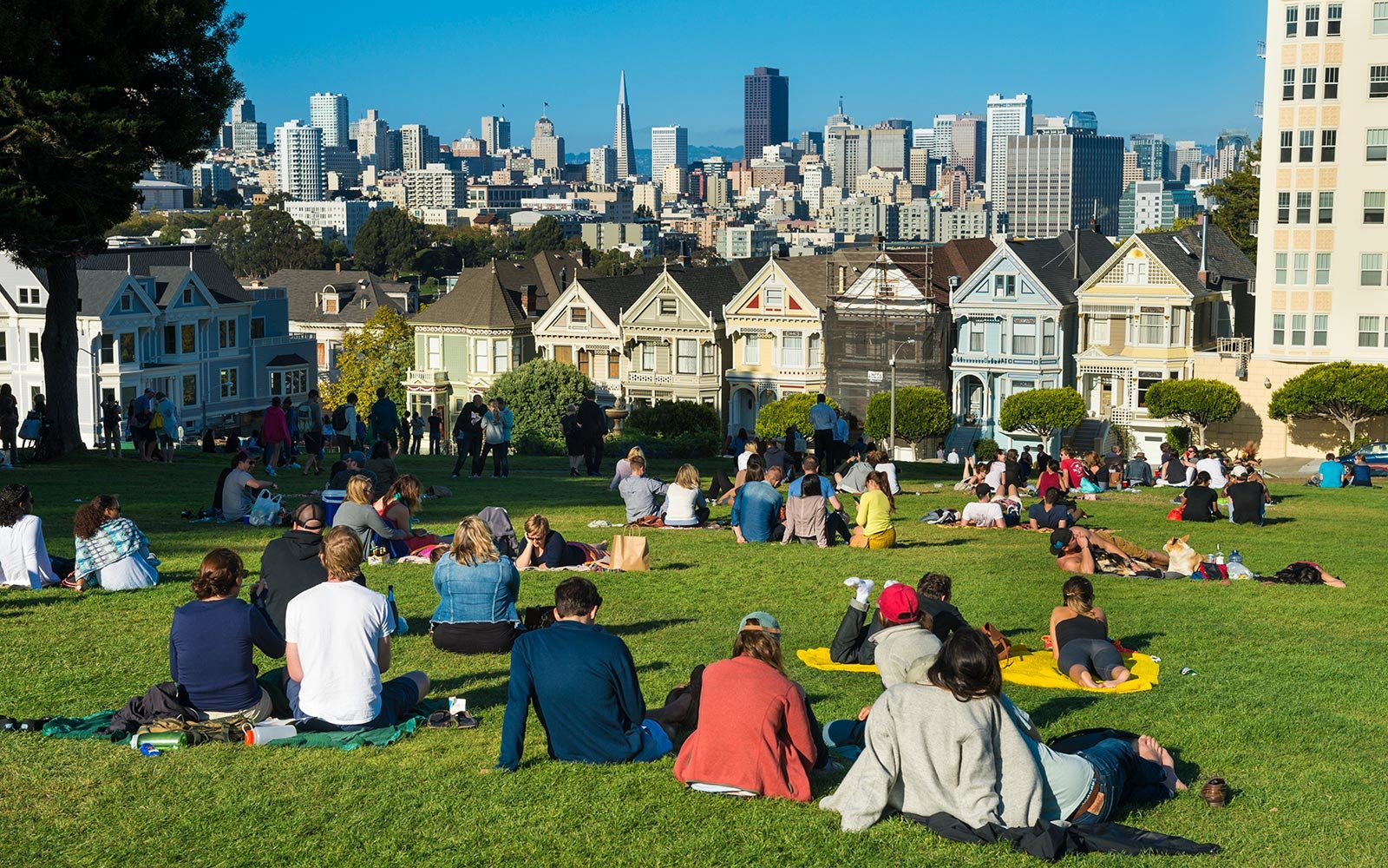 San Francisco California Park Painted Ladies