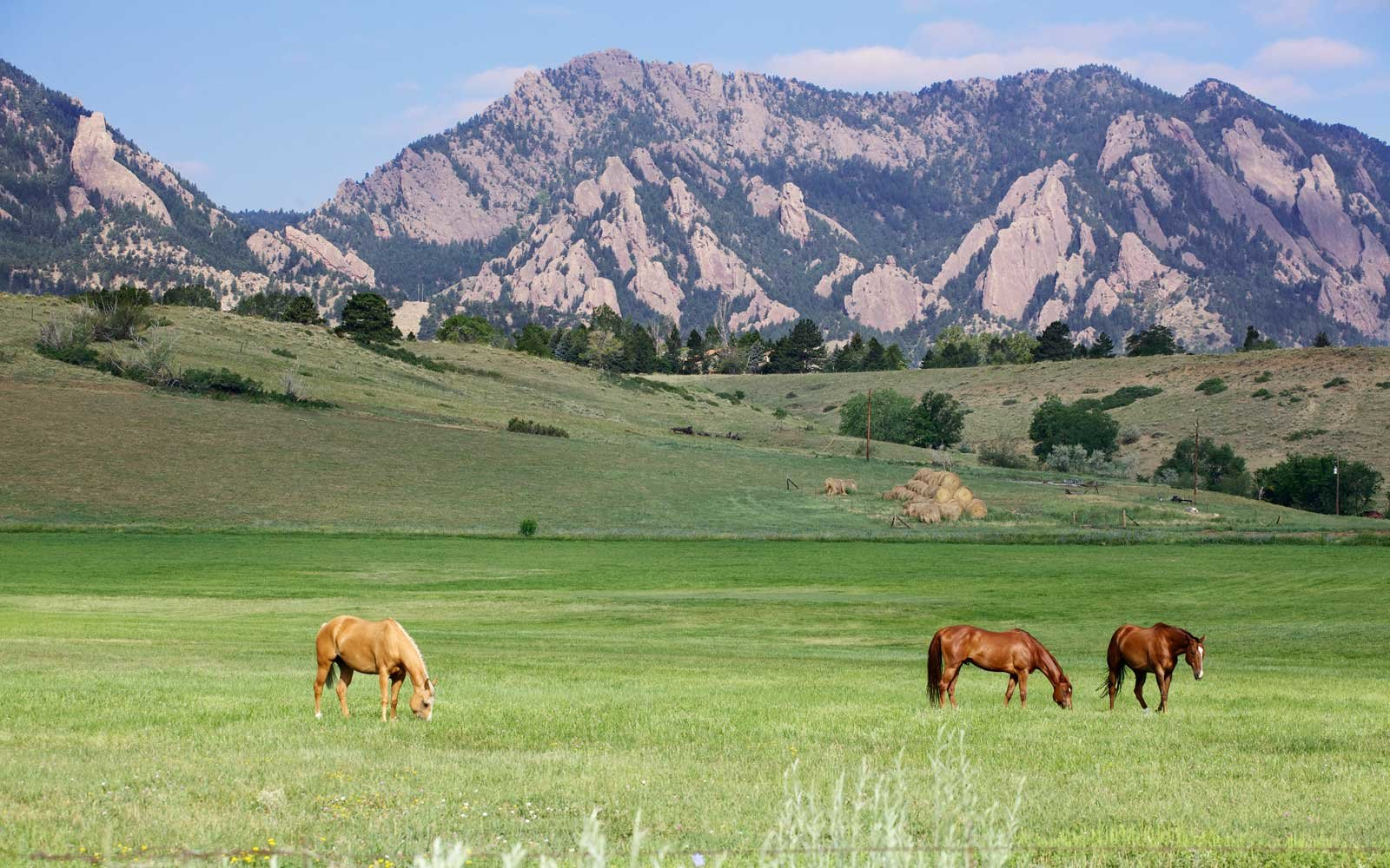 Three horses grazing on a western mountain ranch in Boulder Colorado.
