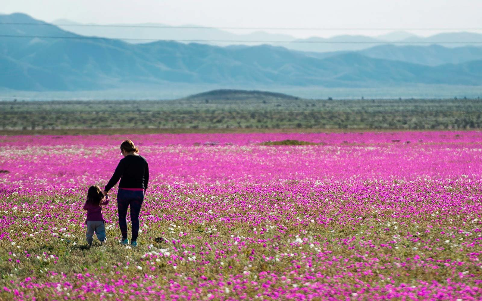 Pantone Purple Atacama Desert Chile