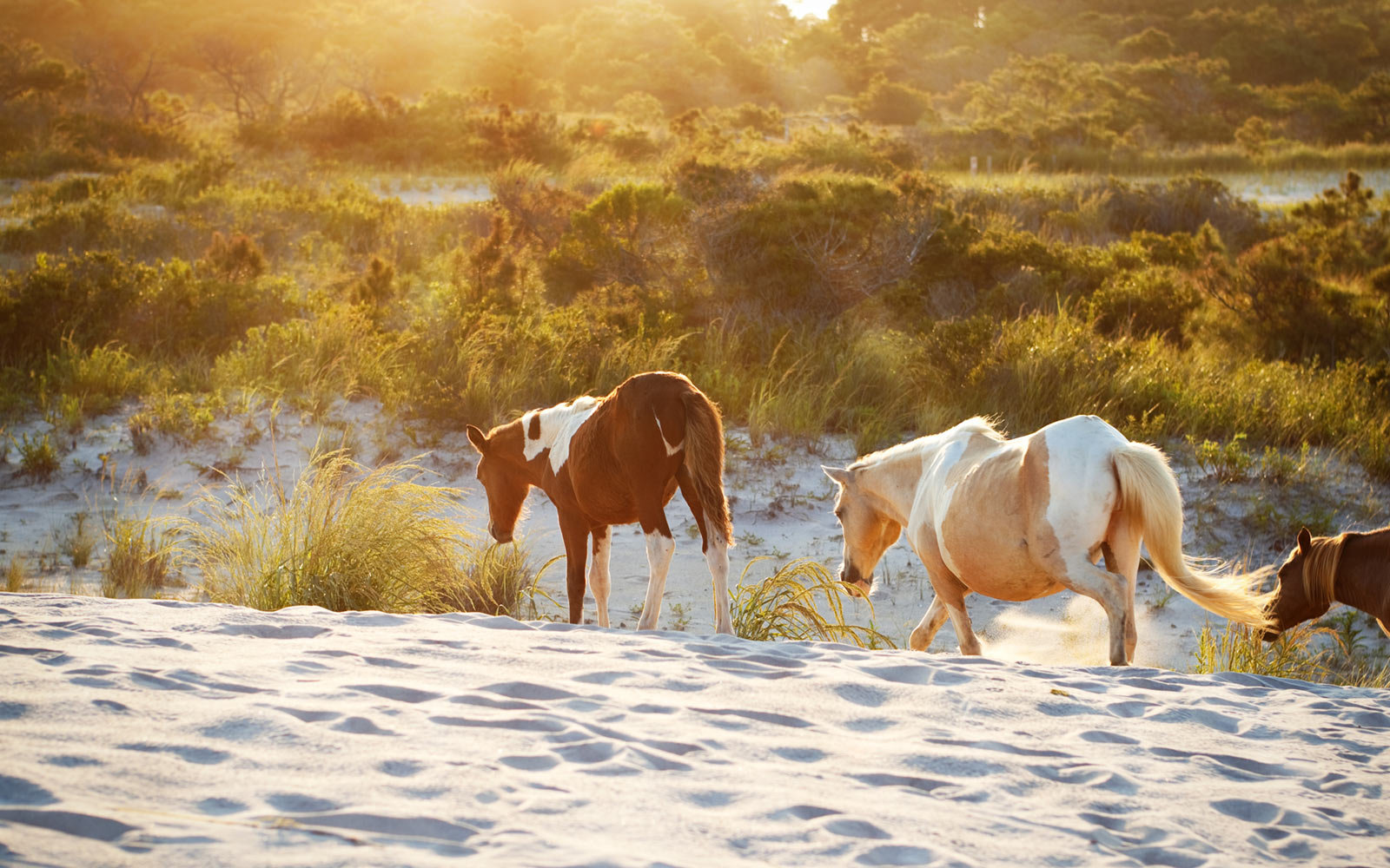 Assateague Island Campgrounds, Maryland