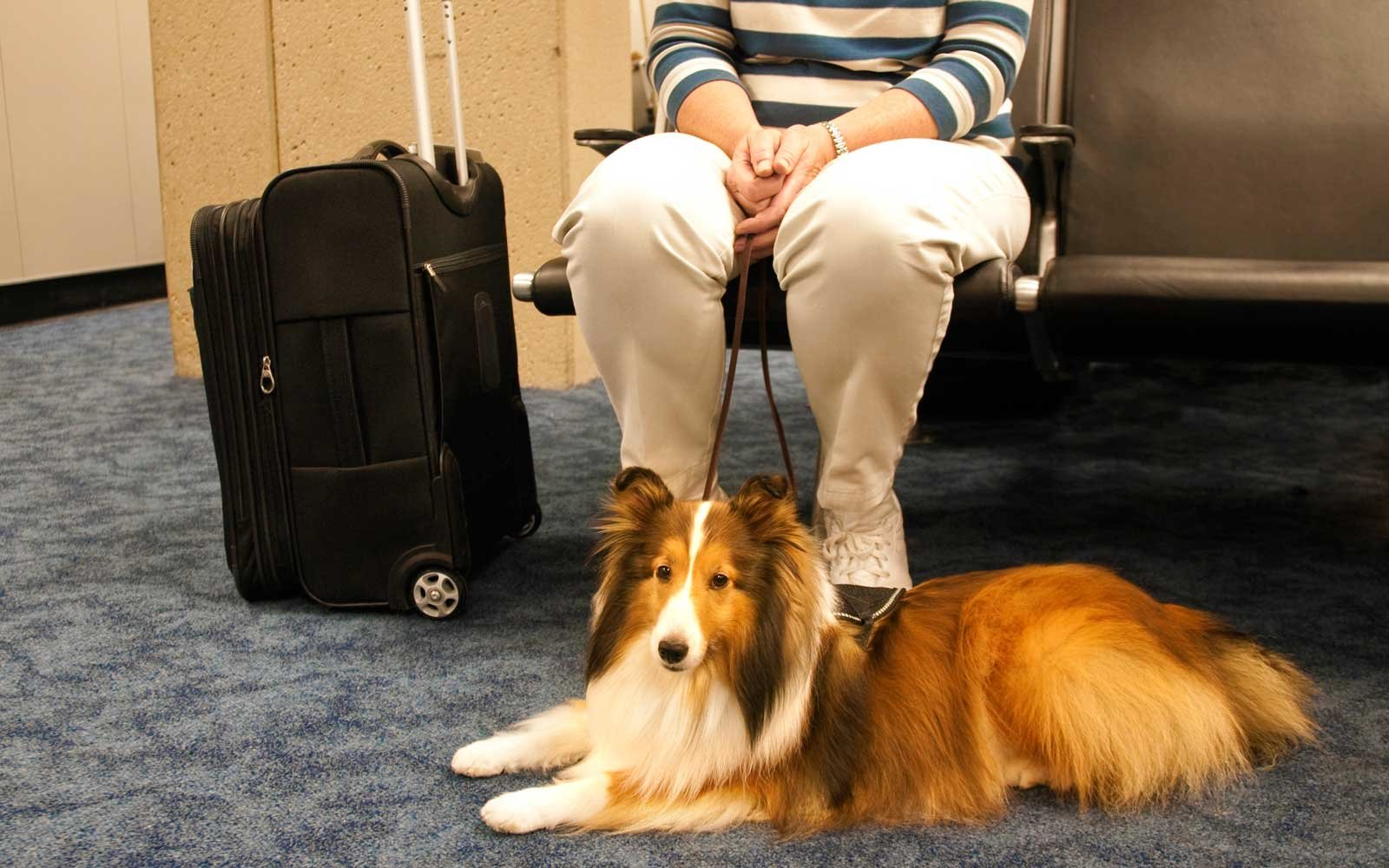 Delta's Cracking Down on 'Emotional Support Animals' On Board Flights
