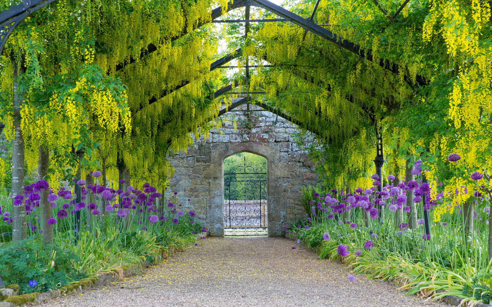 Laburnum Walk at Cowdray House