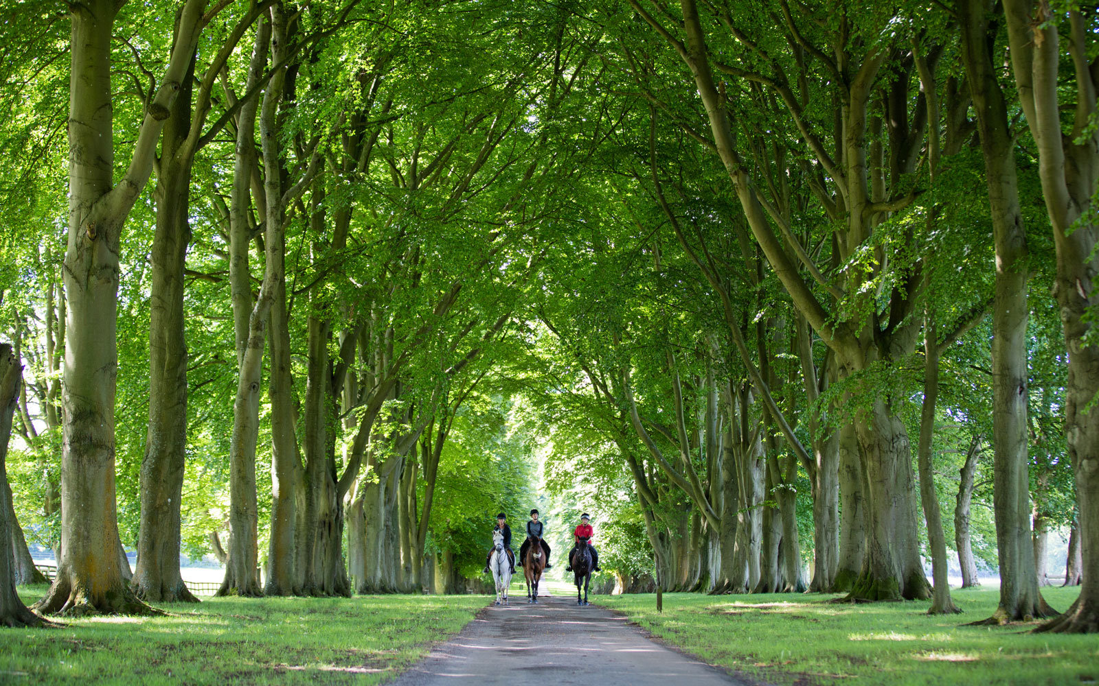 Lucknam Park tree-lined path in England